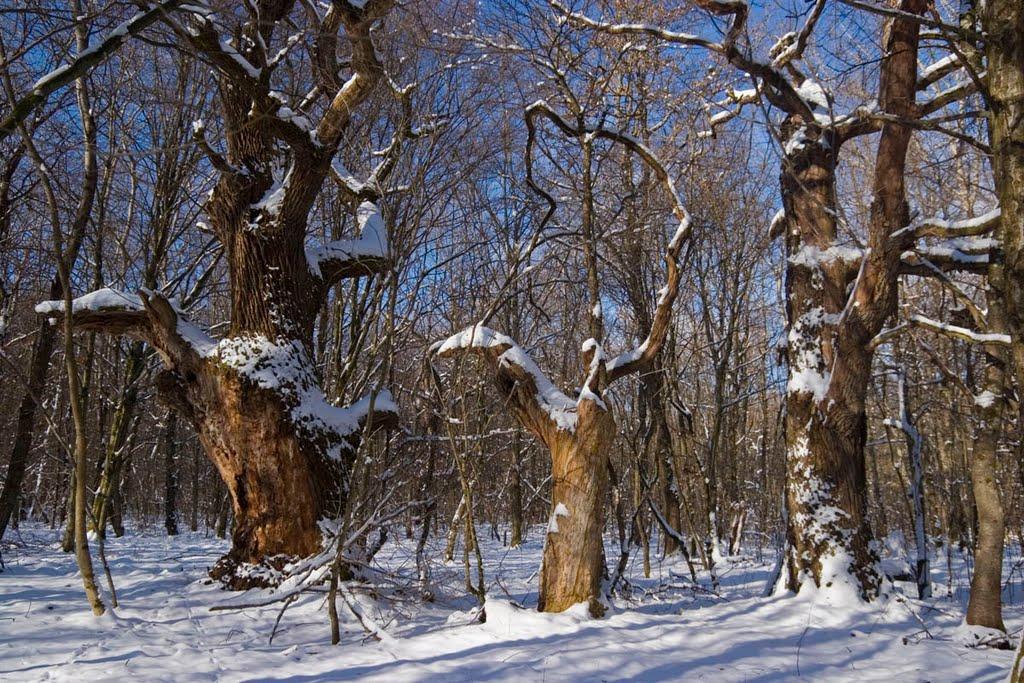 Cea mai bătrână pădure din România – Pădurea Mociar