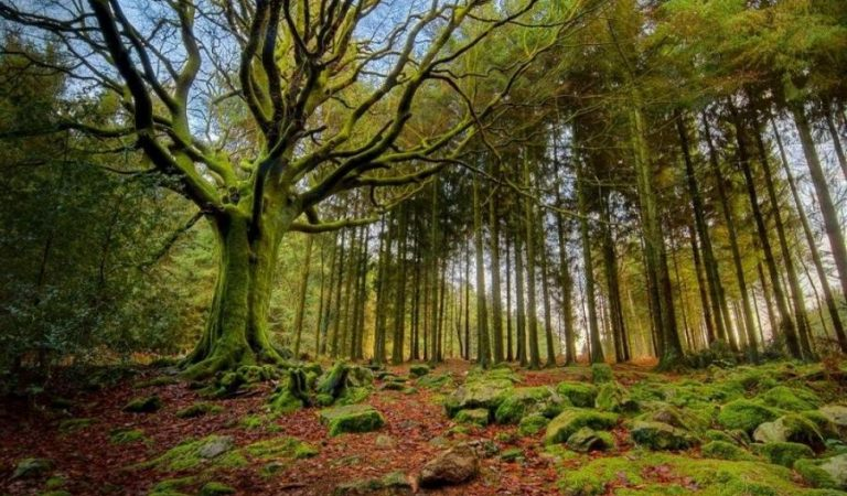 Pădurea Mociar – cea mai bătrână din România