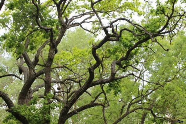 Pădurea Letea – un tărâm de legendă, un loc unic în Europa și cea mai veche rezervație naturală din țara noastră!