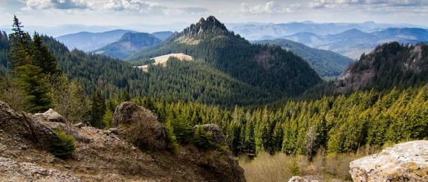 Acestea sunt cele mai frumoase păduri din Europa şi din România!