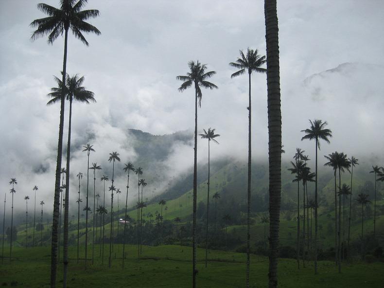 Valea Cocora: Valea cu cei mai înalţi palmieri