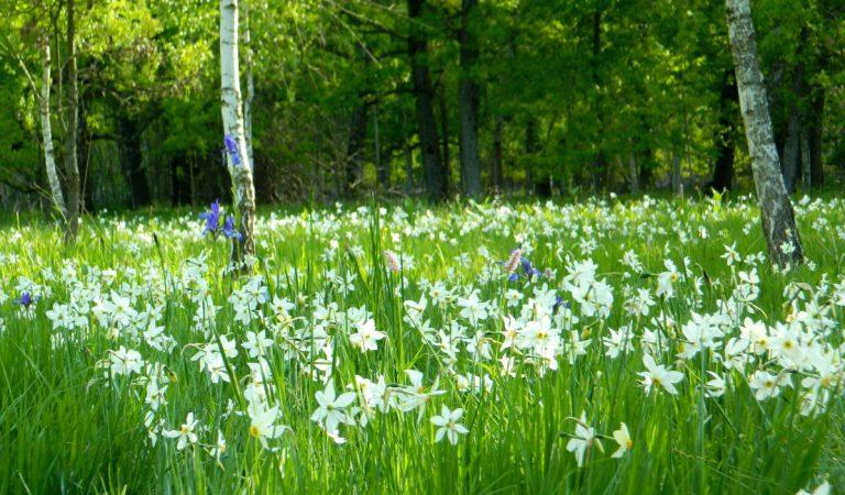Frumusețile naturale din România