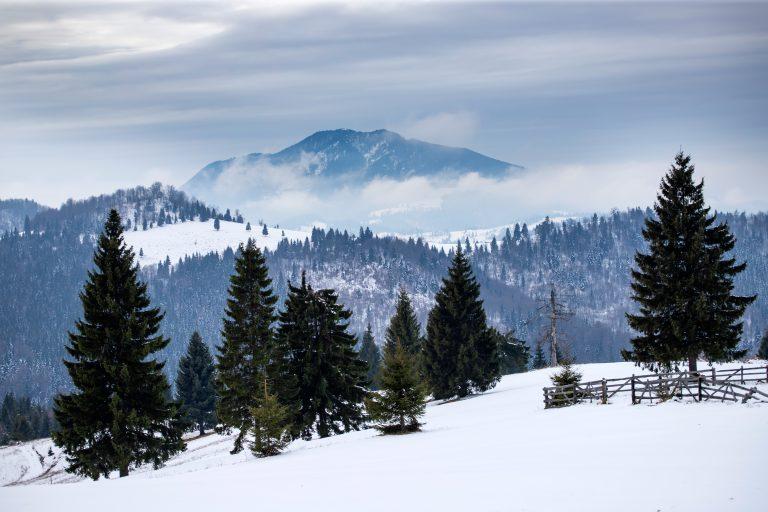 winter forest in the carpathians romania 6SKKDSL