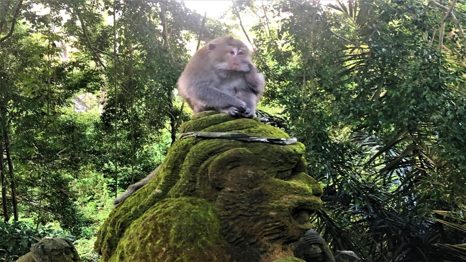 BALI – O CAZARE FANTASTICĂ ȘI VIZITĂ LA MONKEY FOREST!