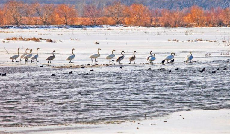 Iarna în Delta Dunării