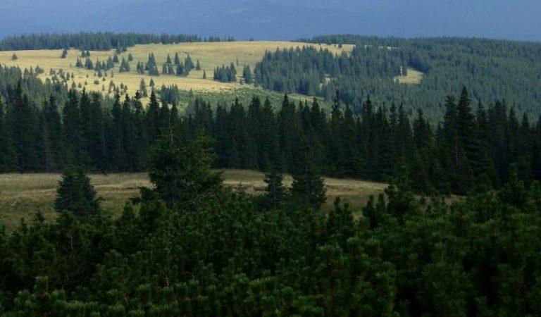 Trasee turistice în Parcul Național Călimani