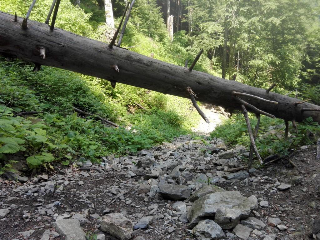 Cascada Scorusu10 1