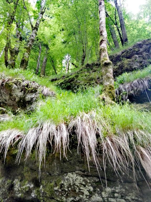 Cascada Scorusu12