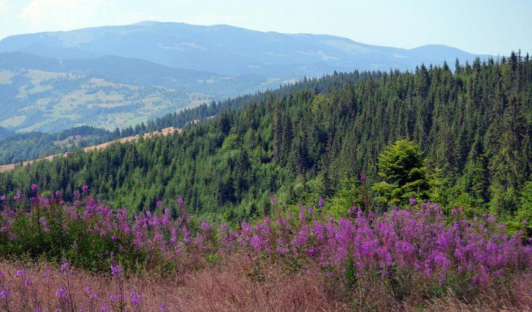 Munții Apuseni