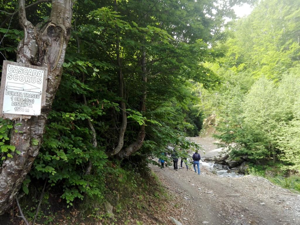 Valea Oltului Transalpina 1