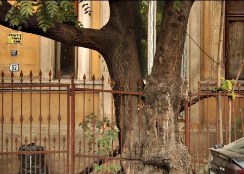 copacul care a inghitit un gard