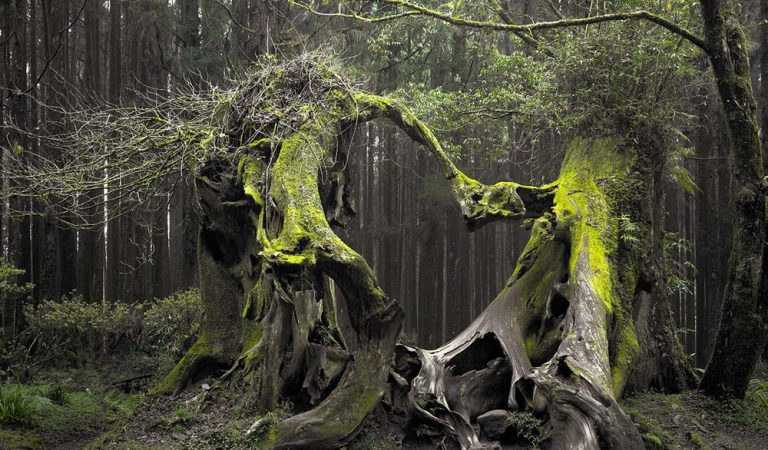 Pădurea Hoia Baciu- la graniță cu paranormalul