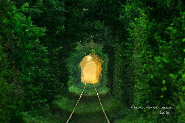 Tunelul Iubirii – drumul îndrăgostiților spre infinit