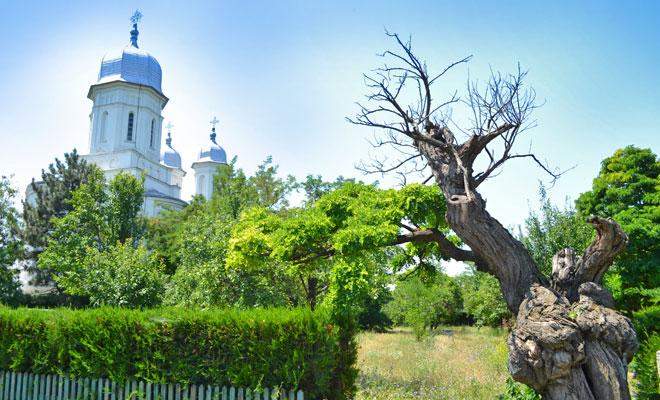 Manastirea Saon din comuna Niculitel