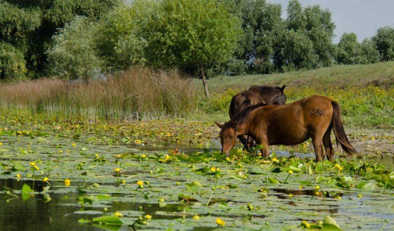 Pădurea Letea – basmul din Delta Dunării