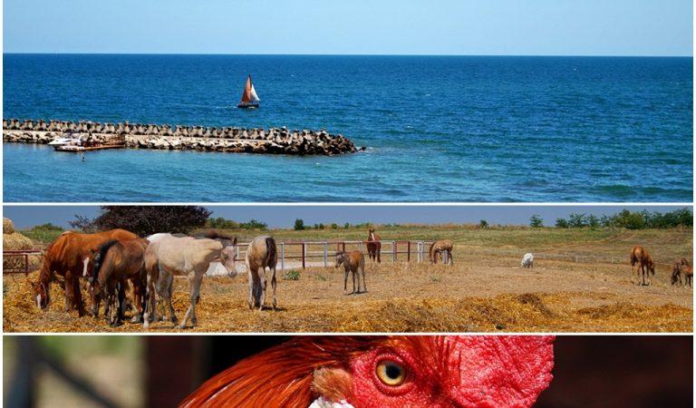 Ce să faci în afară de plajă în sudul litoralului românesc