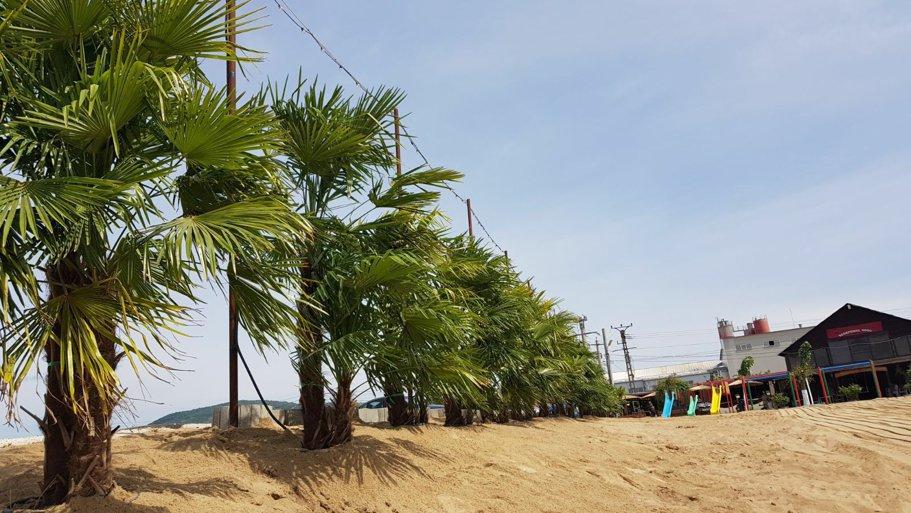 plaja 3