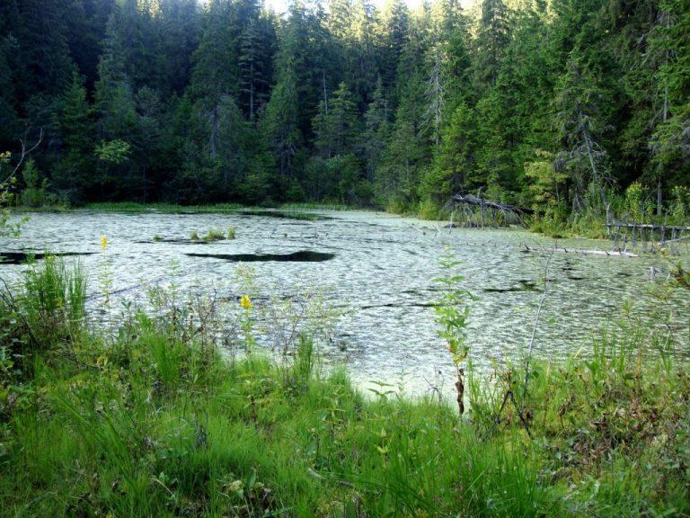 lacul negru vrancea
