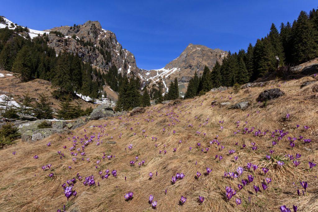 fagaras mountains romania PJV74UK