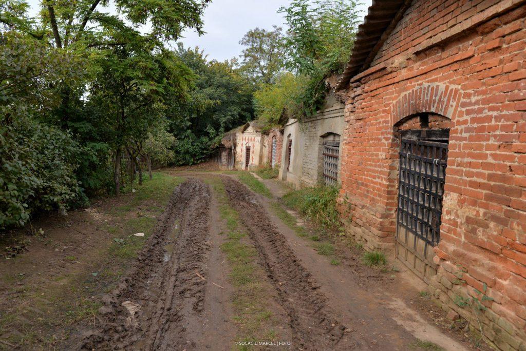 Salacea – satul celor 1000 de pivnite03 1024x684 1