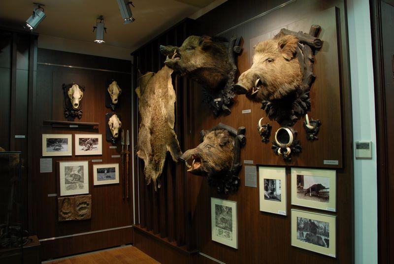 muzeu vanatoare 4