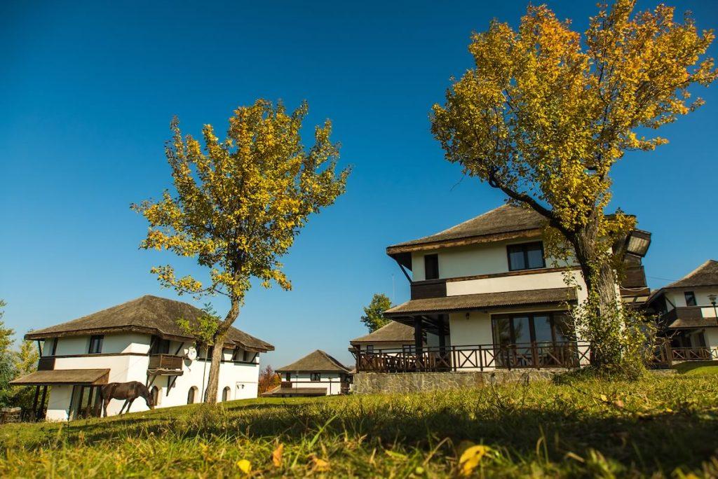 satul prunilor 24