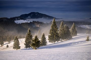 winter forest in the carpathians romania WHBTR3M