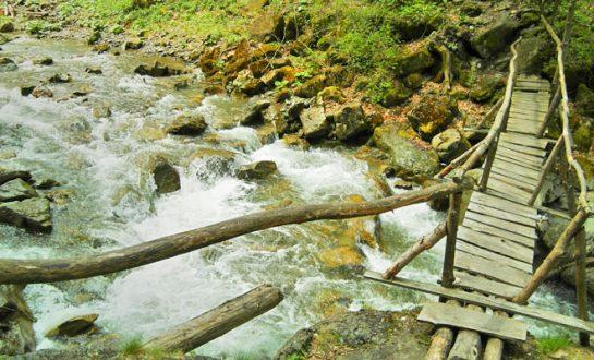 Rezervatia Tisita din comuna Tulnici flickr 545x330 1