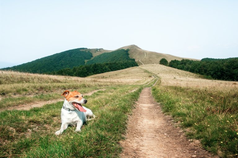 alone white dog on mountains road KM8ZVL2