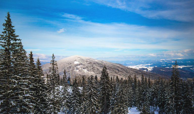 beautiful winter sunny landscape of winter forest ZJENYWZ