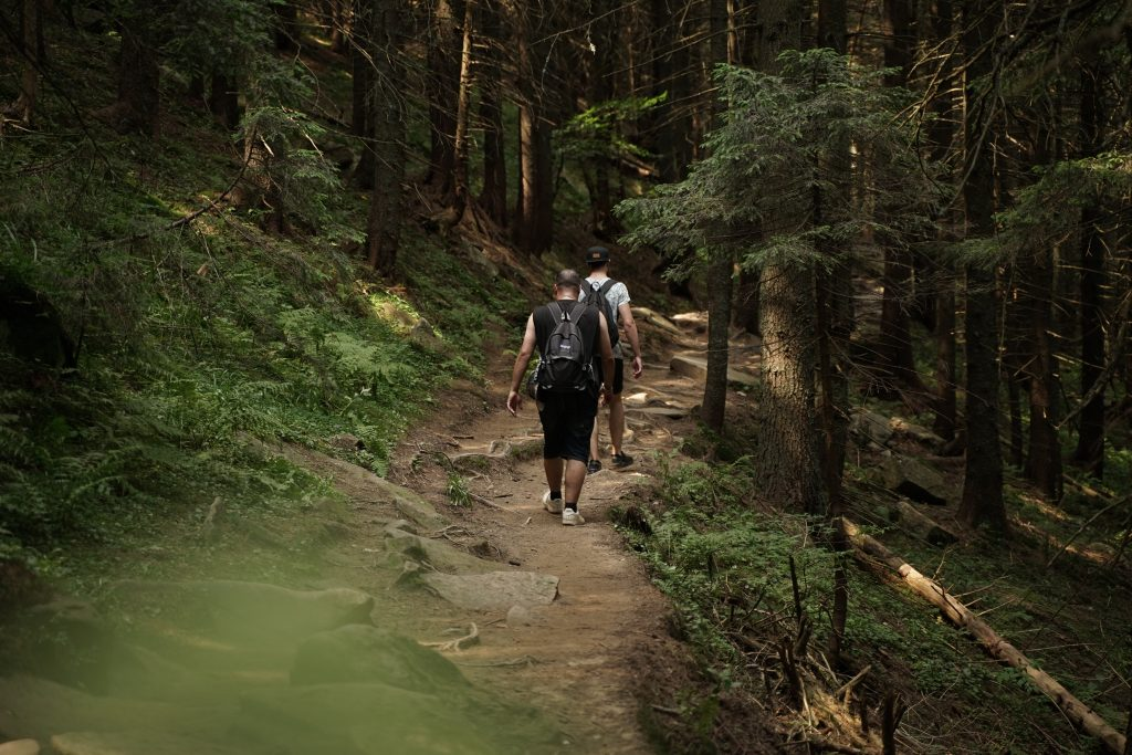 people hiking in the middle of green forest t20 N0nLw2
