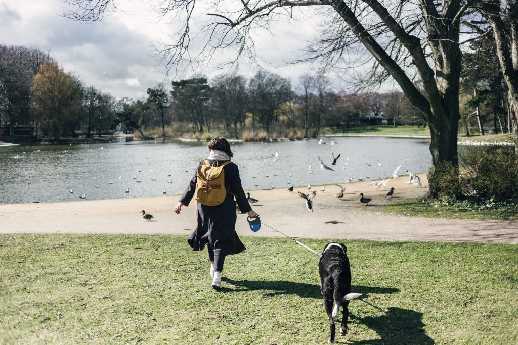 rear view of woman walking with mixed breed dog at PDQZTK5