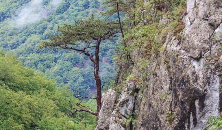 Cheile Țășnei, o bucată de Rai pe pământul românesc
