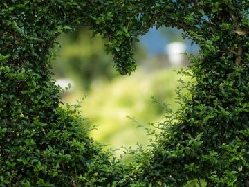 heart 1192662 340