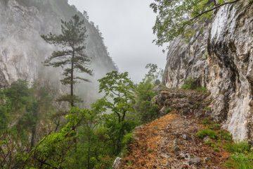 tasnei gorge PQLT499