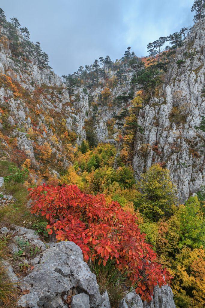 tasnei gorge romania PANUC5E