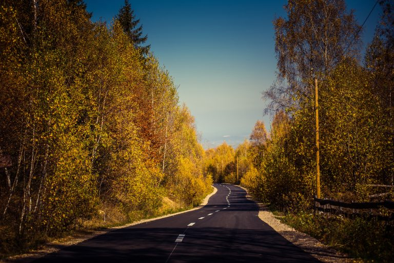 descending empty road in the autumn forest colorfu PPZPS9E