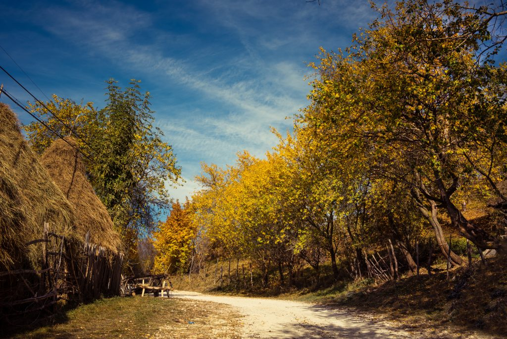 rural village road in the autumn with colorful tre PWUVU4W